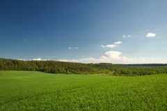 Summer landscape of fields and woods Stock Image