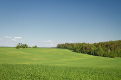 Summer landscape of fields and woods Royalty Free Stock Photos