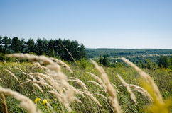 Summer landscape of fields and woods stretching into the distance. A cloudless sky royalty free stock images