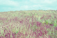 Summer landscape with flower meadow. Royalty Free Stock Image