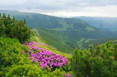 Summer landscape with flowers Royalty Free Stock Photography