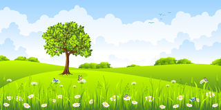 Summer landscape with flowers. And butterflies Stock Photo