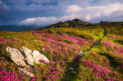 Summer landscape with flowers and hiking trail in the mountains Royalty Free Stock Photos