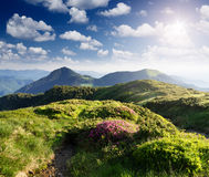 Summer landscape with flowers in the mountains Stock Images