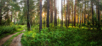 Summer landscape foggy night in a pine forest with a dirt road, Russia, Ural Royalty Free Stock Photos