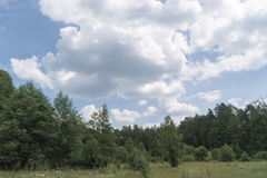 Summer Landscape. Forest and blue sky with white clouds Stock Image