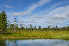 Summer landscape with forest, lake and swamp Royalty Free Stock Image