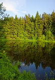 Summer landscape with forest lake and tree. Reflection in water Stock Photos