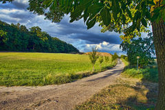 Summer landscape. With forest and meadow Stock Photography