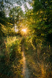 Summer Landscape With Forest Path Going Ahead To Sunset Sunrise Stock Photos