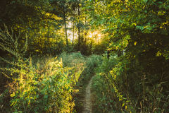Summer Landscape With Forest Path Going Ahead To Sunset Sunrise Royalty Free Stock Photos