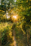 Summer Landscape With Forest Path Going Ahead To Sunset Sunrise Stock Image