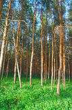 In summer forest Stock Images