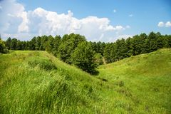 Summer landscape with forest and ravine Royalty Free Stock Photos