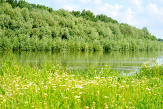 Summer landscape with forest and river Royalty Free Stock Images