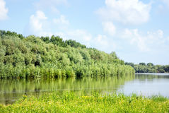 Summer landscape with forest and river Stock Image