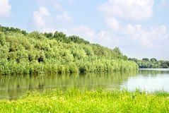 Summer landscape with forest and river Stock Photography