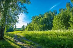Summer landscape with forest road. Summer landscape with forest road on bright Sunny day stock images