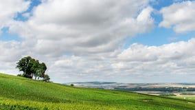 Summer landscape in France. Summer landscape, Montagne de Reims, France. Header for website Royalty Free Stock Image