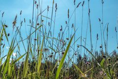 Summer landscape. Grass against the blue sky.  royalty free stock photography