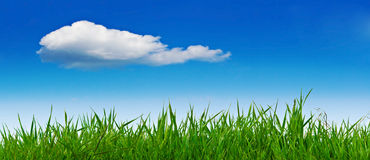 Summer landscape with grass and sky Stock Image