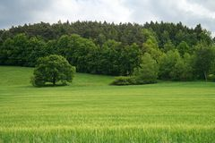 Summer landscape of grass and trees Royalty Free Stock Photo