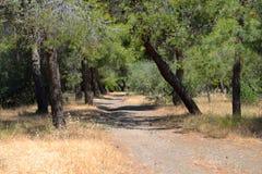 Summer landscape, Greece. royalty free stock photo