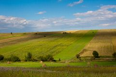 Summer landscape with green cultivated fields Royalty Free Stock Photography
