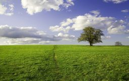 Summer landscape - green field Royalty Free Stock Photo