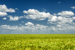 Summer landscape. green field and clouds Royalty Free Stock Photos