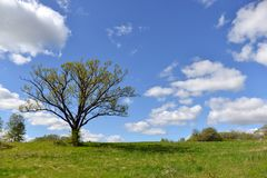 Summer landscape with green field, clouds and big tree - Image. Summer landscape with green field, clouds and big tree stock photos