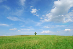 Summer landscape - green field and lonely tree Royalty Free Stock Images
