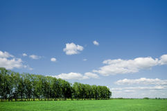 Summer landscape of green forest with blue sky Royalty Free Stock Photography