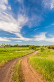 Summer landscape with green grass Royalty Free Stock Images