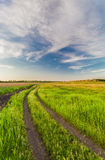 Summer landscape with green grass Royalty Free Stock Photos