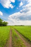 Summer landscape with green grass Royalty Free Stock Photography