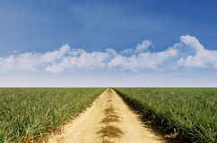 Summer landscape with green grass and blue sky Royalty Free Stock Photos
