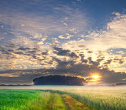 Summer landscape with green grass, corn, tree and clouds Royalty Free Stock Photography