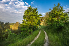 Summer landscape with green grass and countryside road Royalty Free Stock Photos