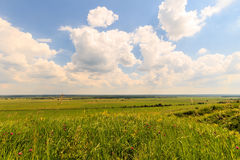 Summer landscape with green grass on a meadow and sky Stock Photography