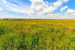 Summer landscape with green grass on a meadow and sky Stock Photos