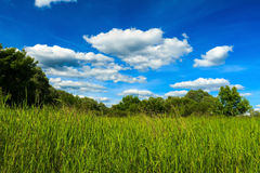 Summer landscape with green grass on a meadow and sky Stock Image