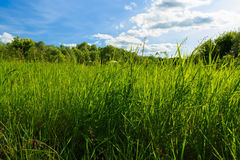 Summer landscape with green grass on a meadow and sky Royalty Free Stock Images