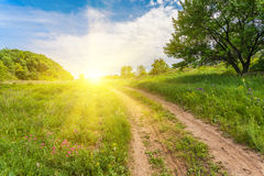 Summer landscape with green grass Stock Images