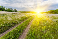 Summer landscape with green grass Stock Photography