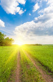 Summer landscape with green grass Royalty Free Stock Photo
