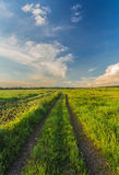 Summer landscape with green grass and road Stock Photos