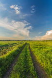 Summer landscape with green grass and road Royalty Free Stock Photo