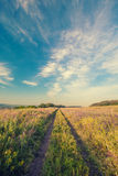 Summer landscape with green grass Royalty Free Stock Image