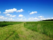 Summer landscape with green grass, road and clouds. Royalty Free Stock Photography